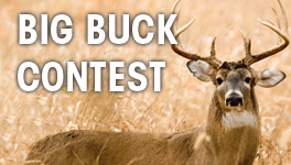 Big Buck Contest